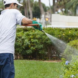 lawn care and fertilizer