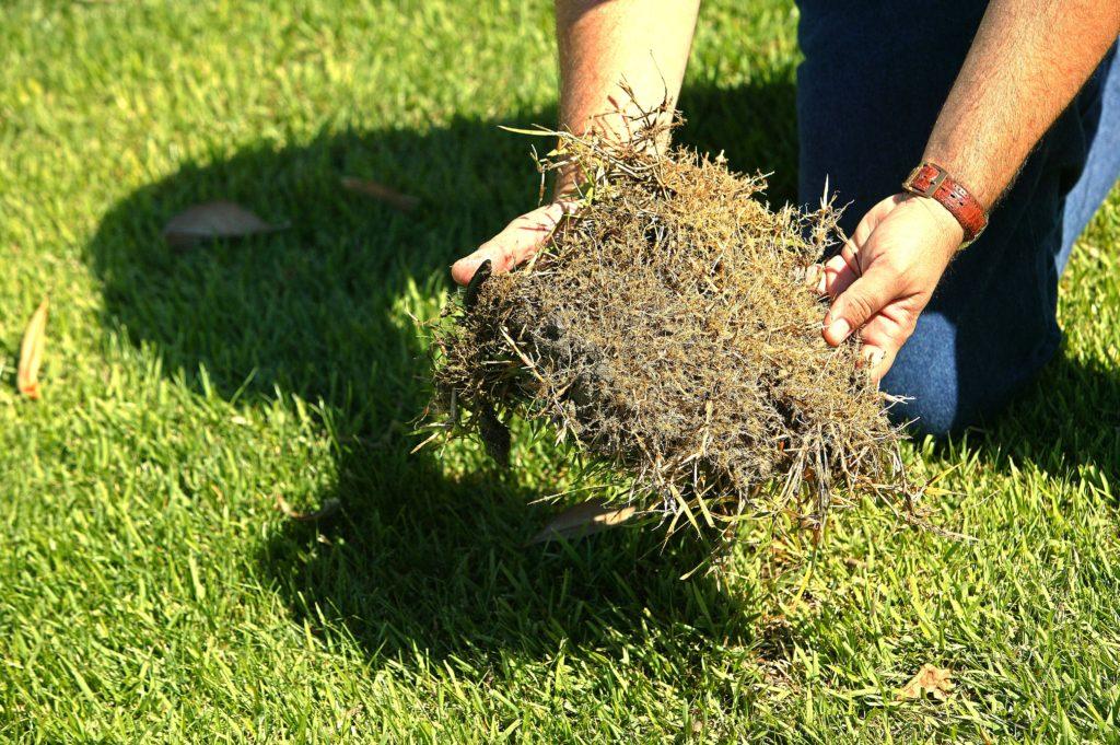 empire grass root stystem